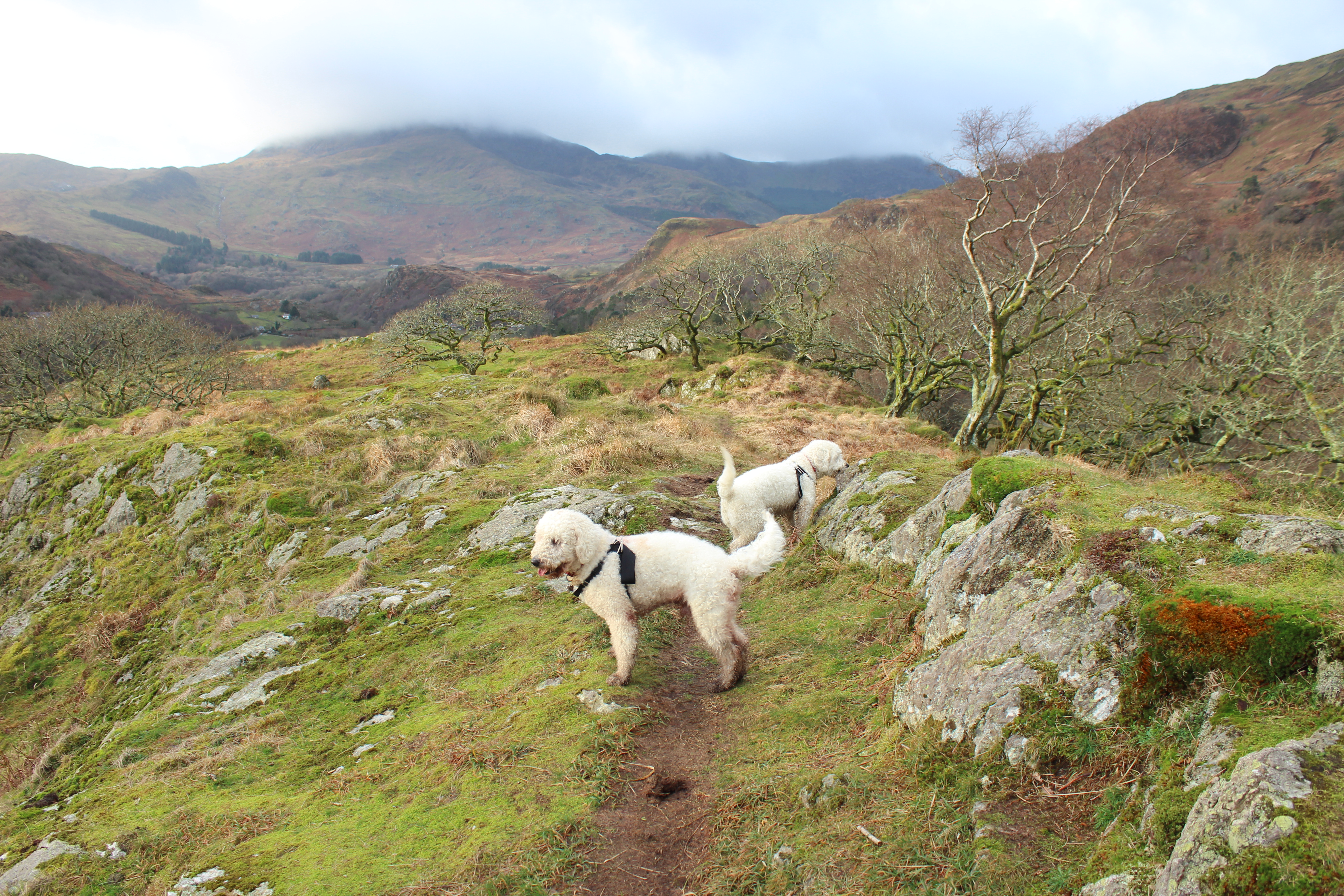 Dinas Emrys summit with dogs