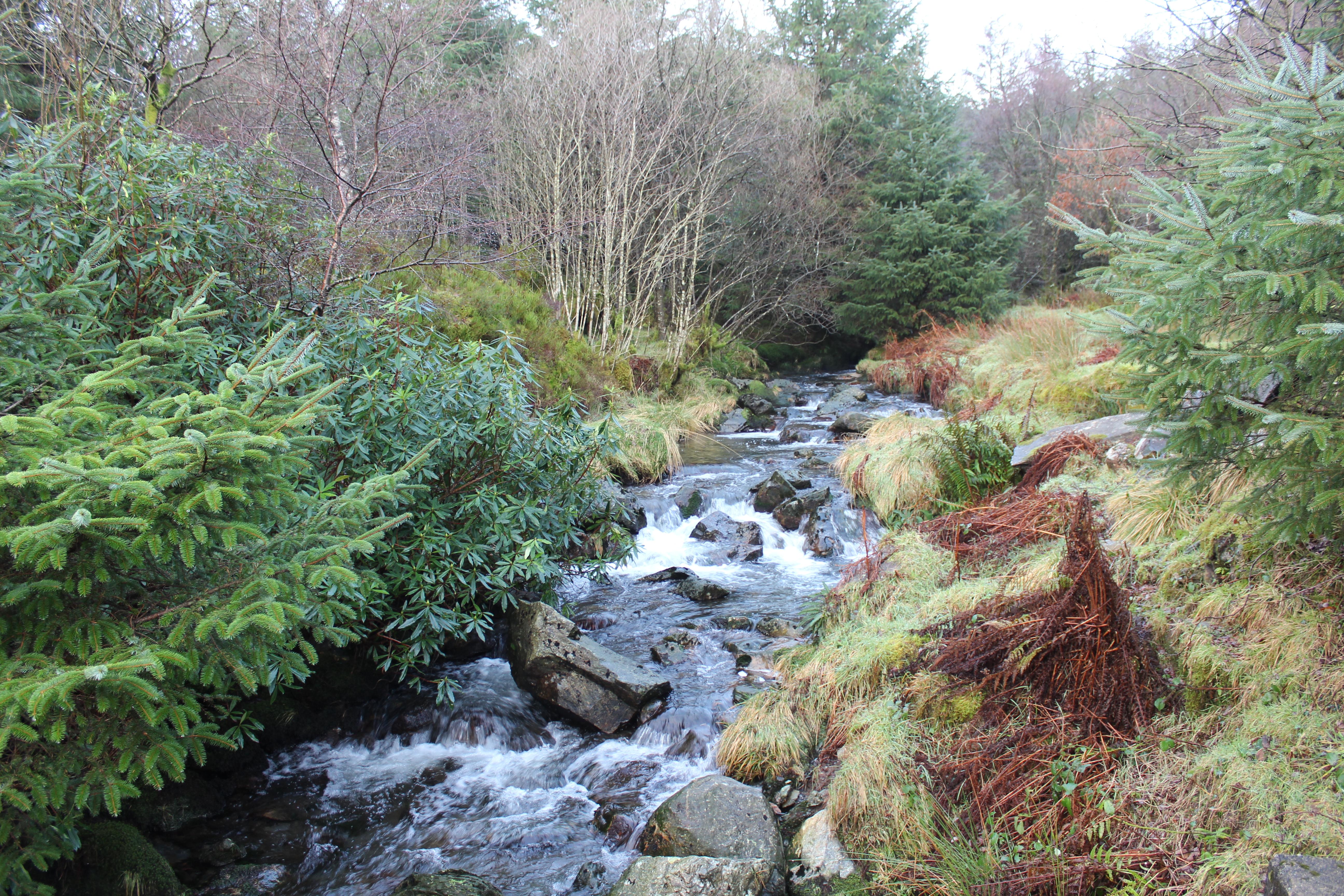 Beddgelert Forest river