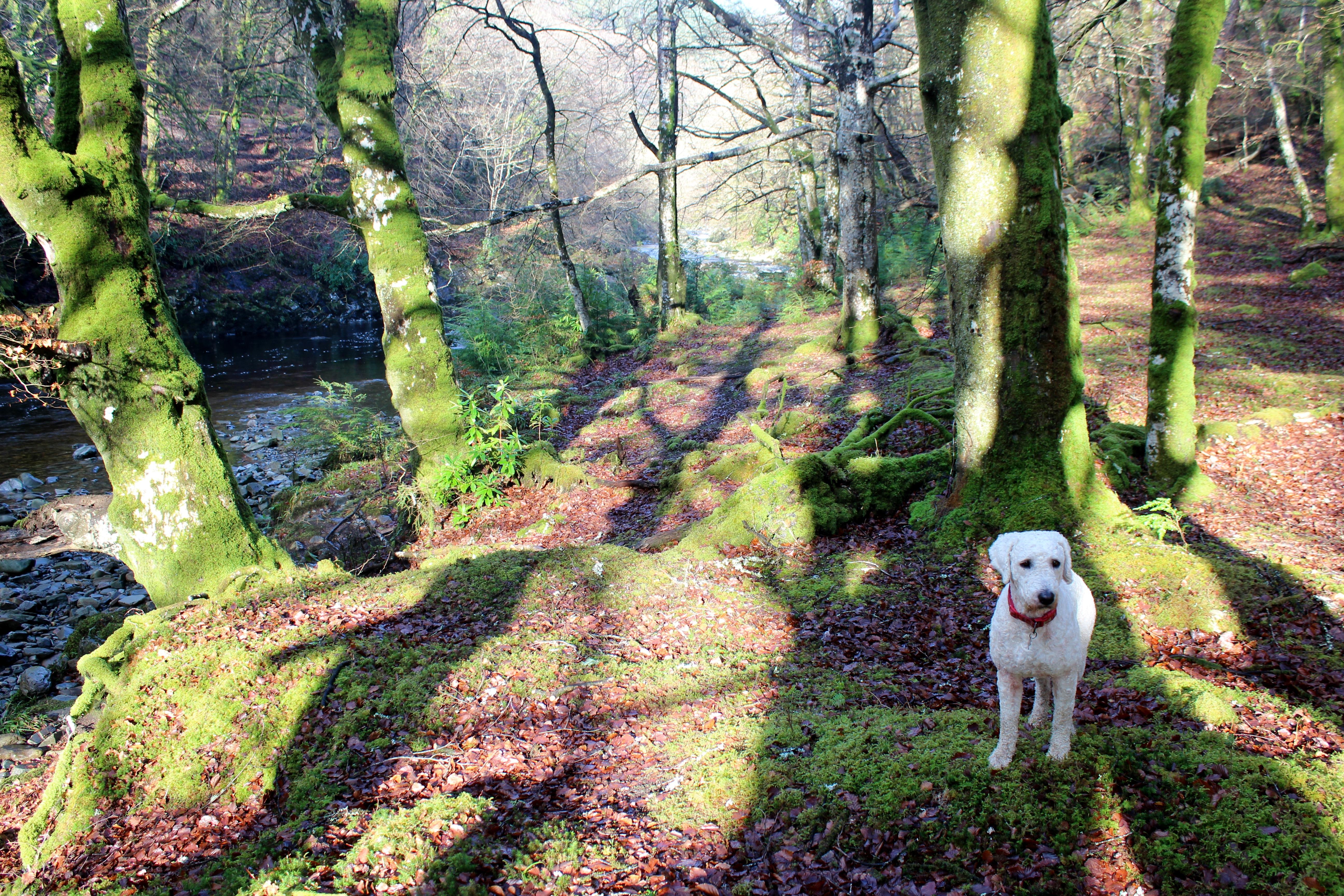 Coed Y Brenin woodland