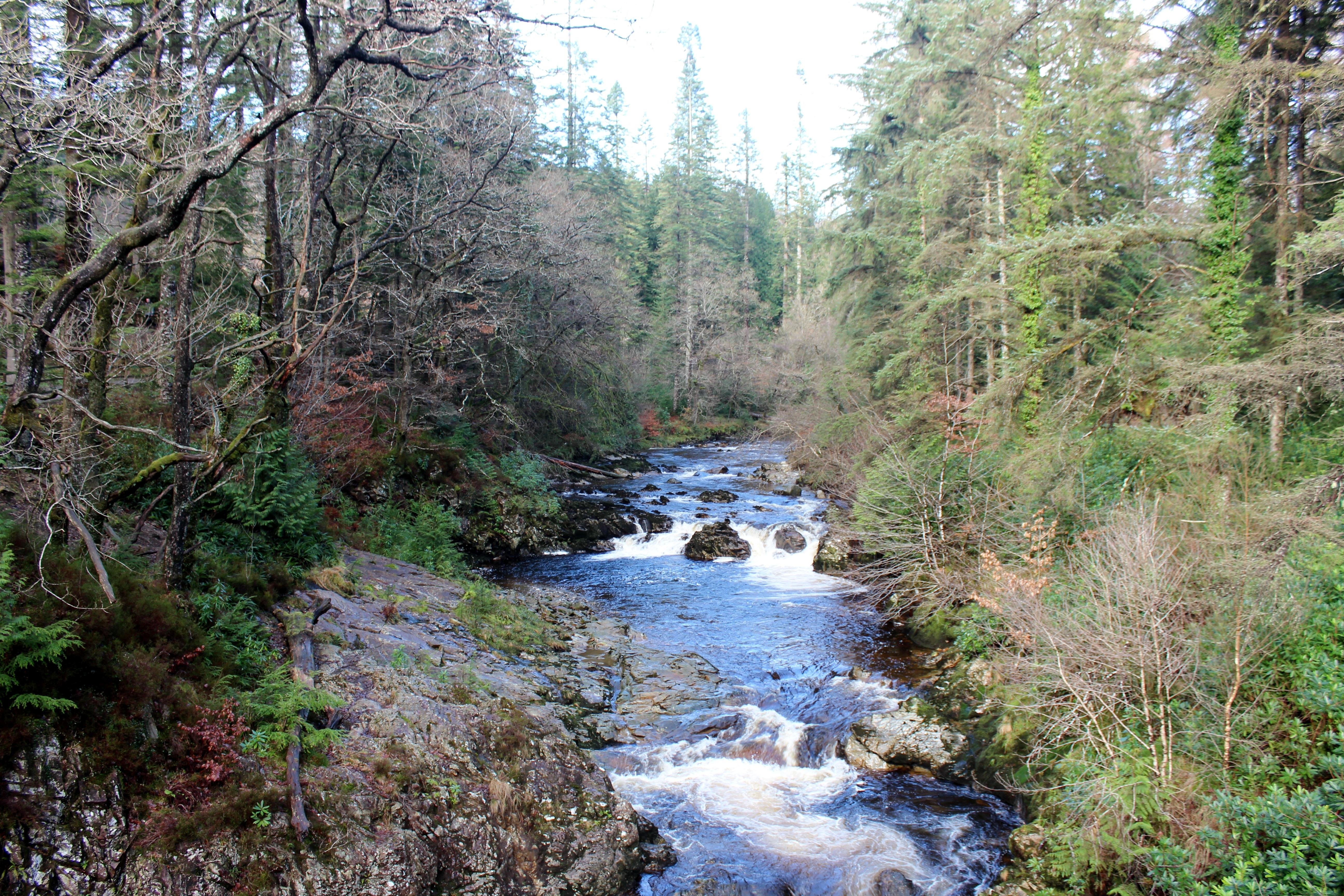 Coed Y Brenin river Mawddech