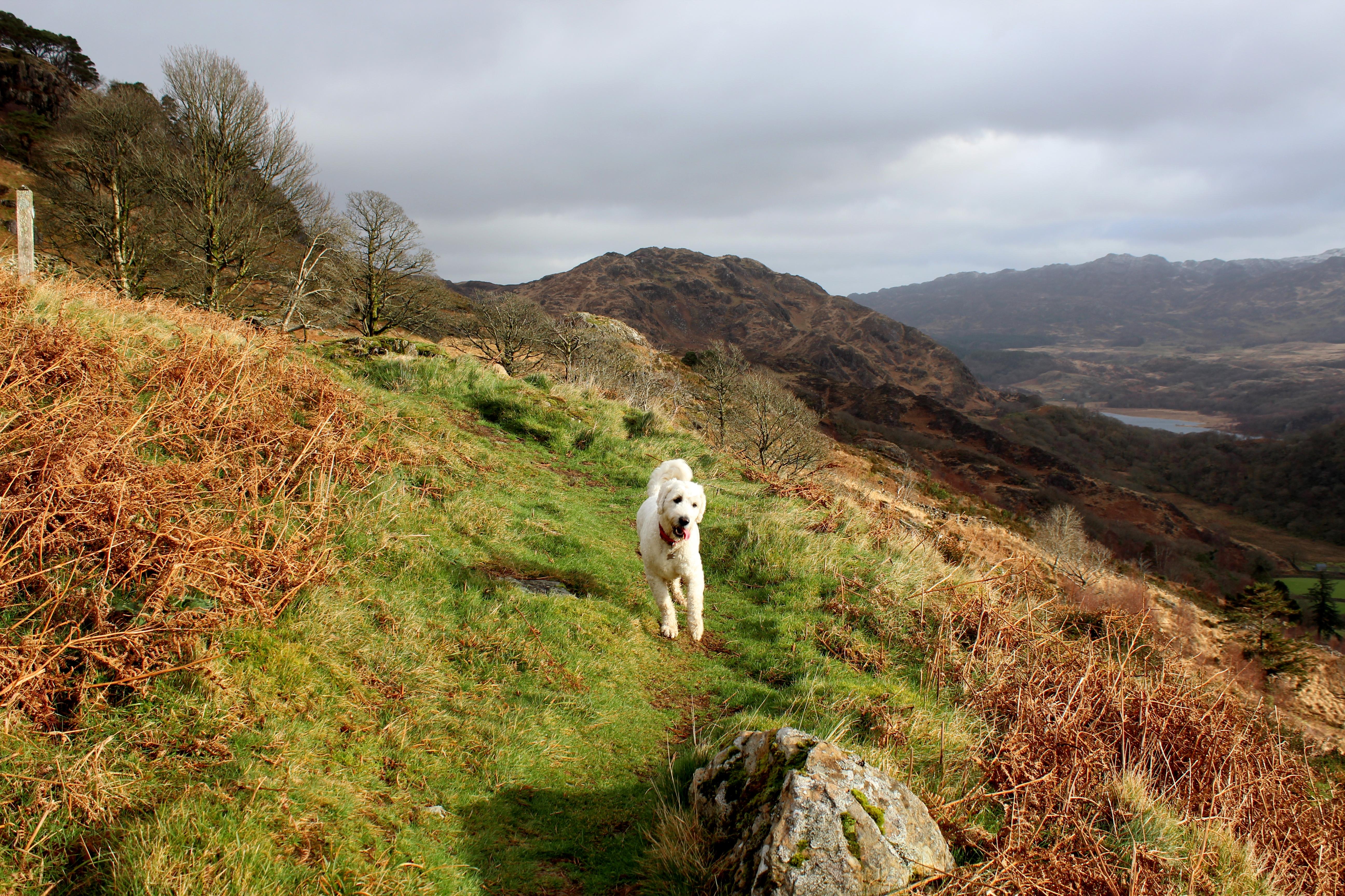 Bodie at Craflwyn