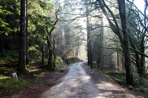 Waterfalls trail Coed Y Brenin