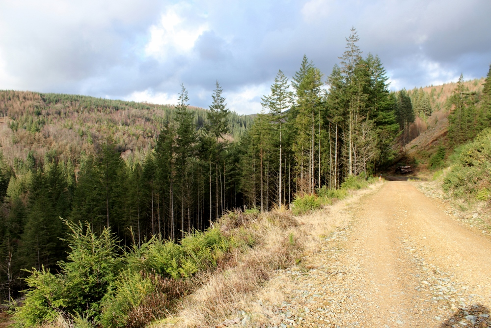Volcano Trail Coed y Brenin
