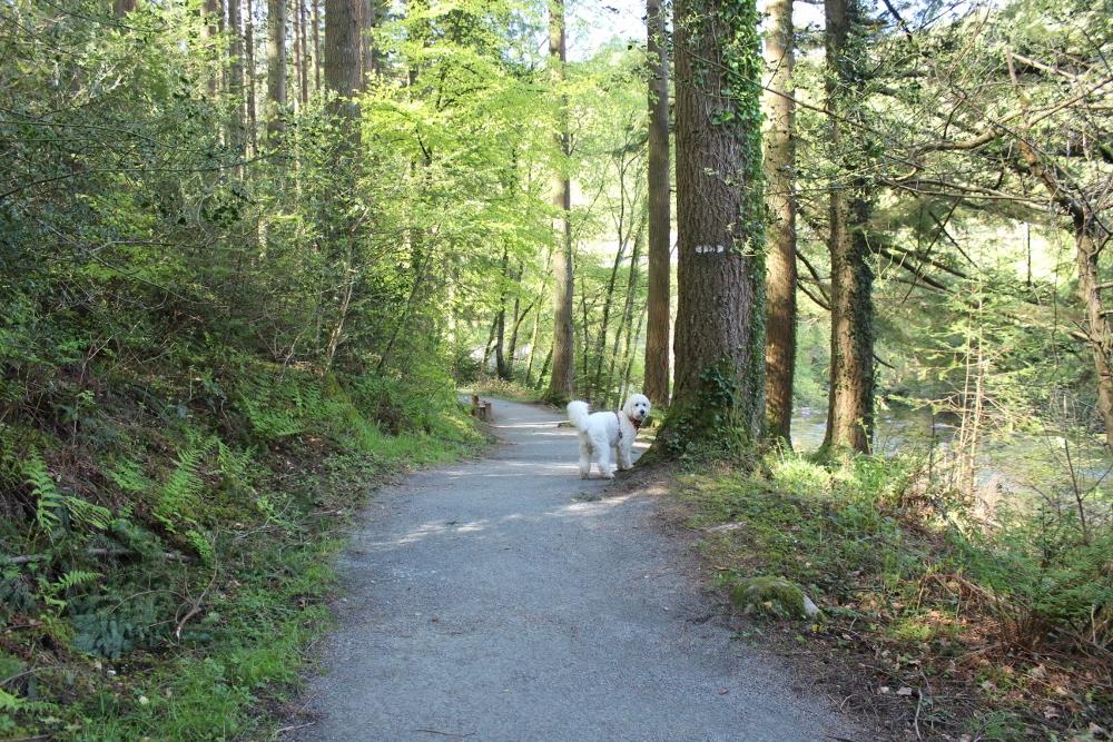 Penrhos Mountain Trail