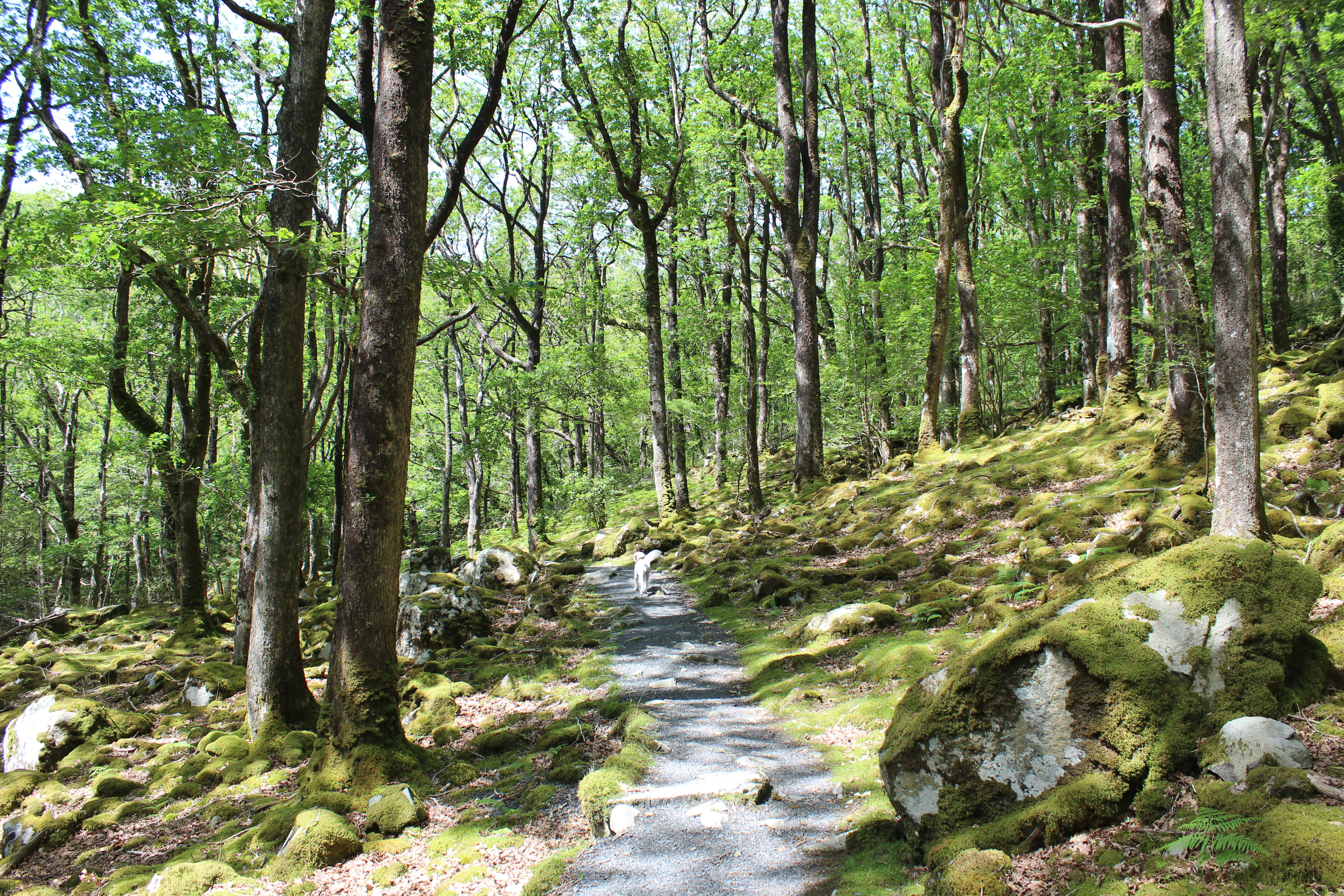 Woodland at Dolmelynllyn
