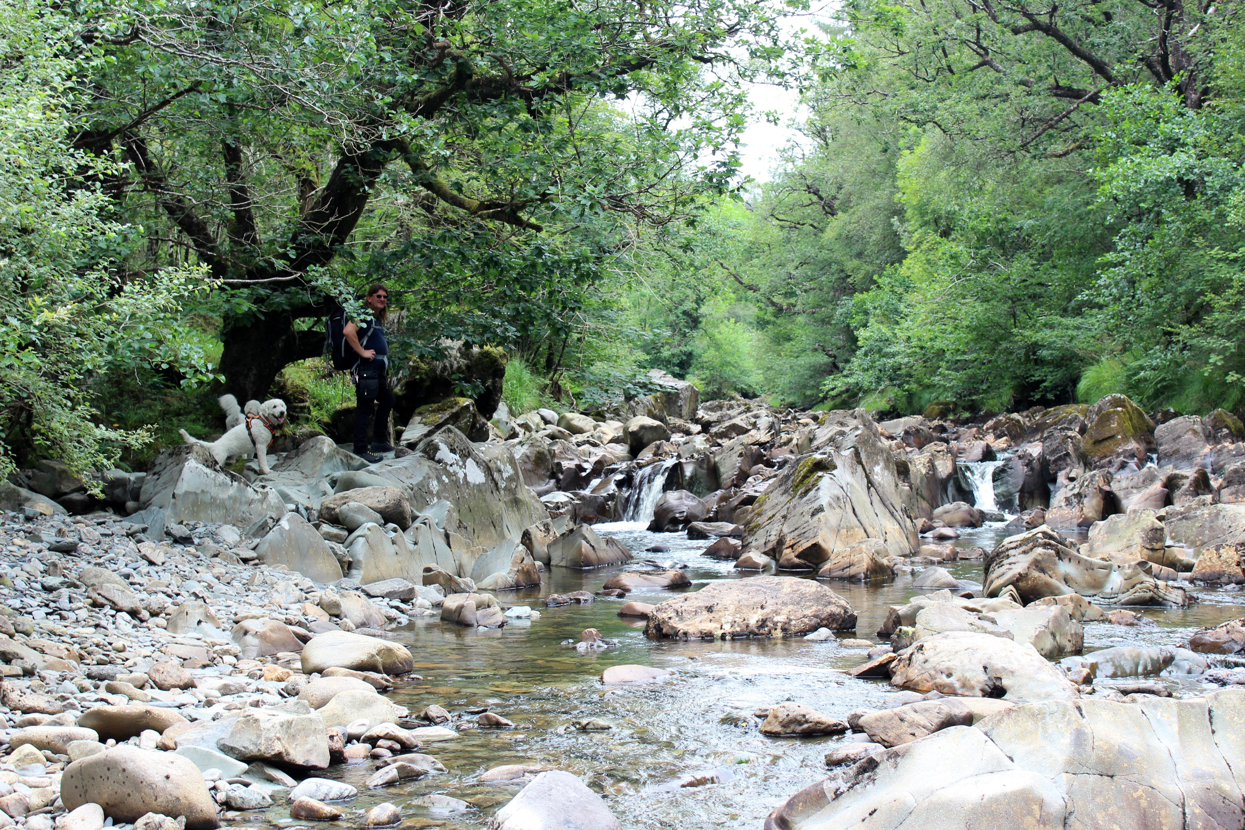Coed y brenin river Eden