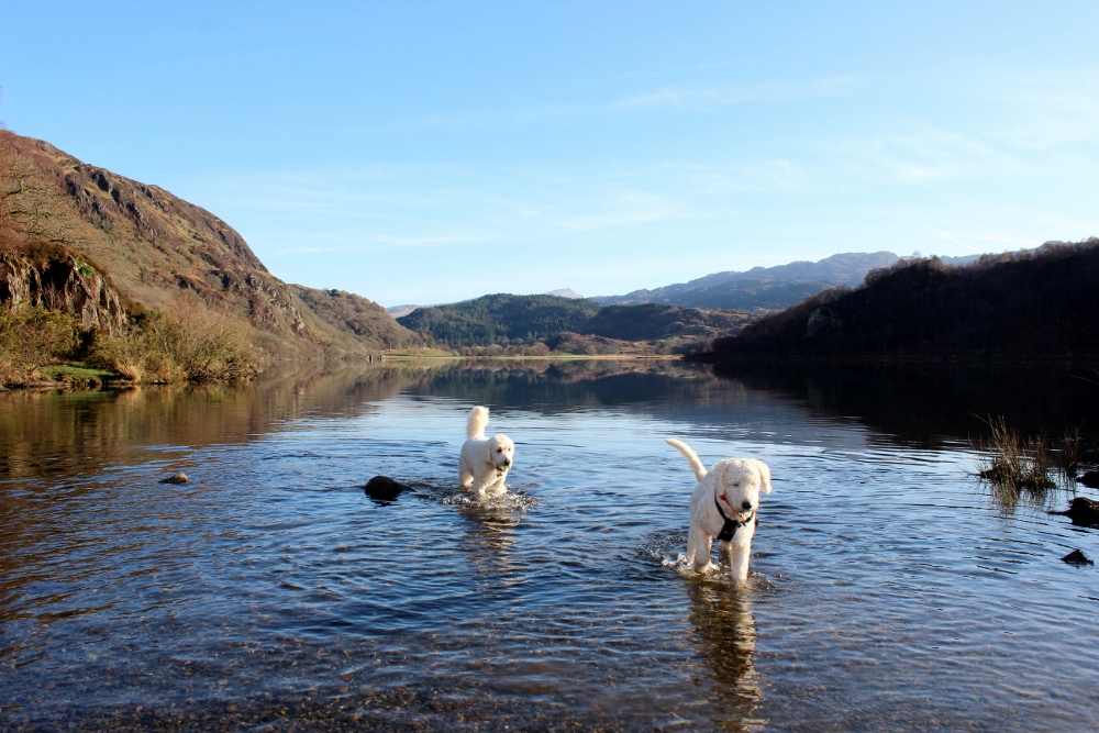 Bodie and Dougal at Llyn Dinas